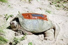 turtle solar